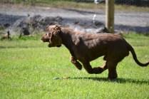Banksia Park Puppies Wooster