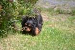 Banksia Park Puppies_Cuddles