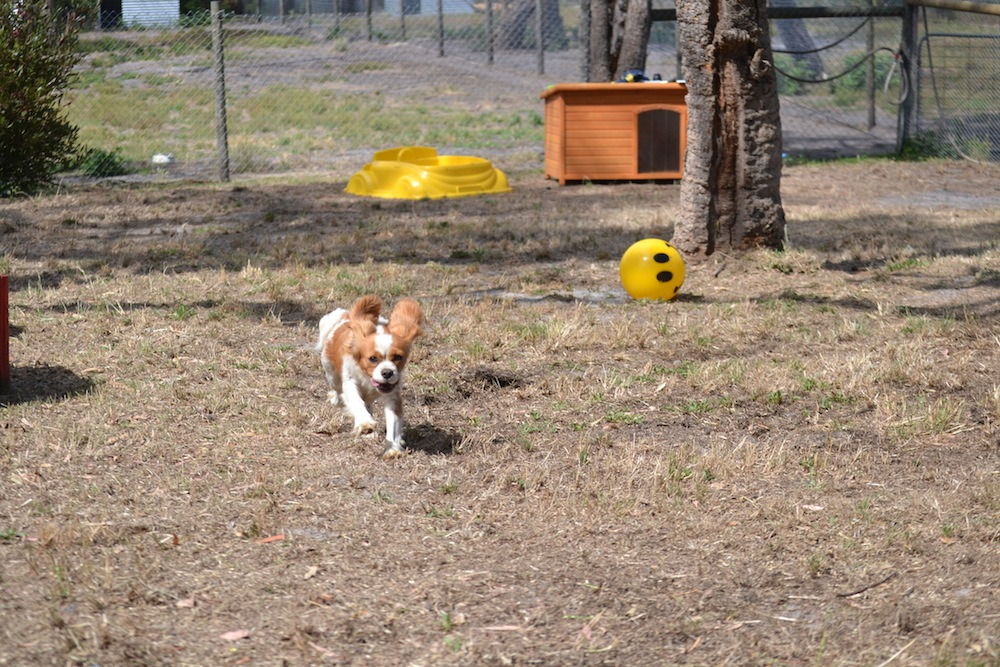 Banksia Park Puppies_Cuz