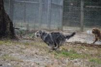 Banksia Park Puppies_Fee