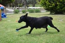Banksia Park Puppies_Larna