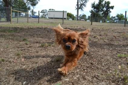 Banksia Park Puppies_Rosara