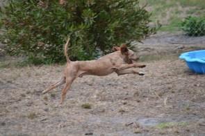 Banksia Park Puppies_skitz