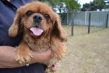 britz-banksia-park-puppies-12-of-18