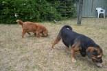 britz-banksia-park-puppies-17-of-18