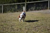 Oddball- Banksia Park Puppies - 29 of 33