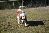 Oddball- Banksia Park Puppies - 30 of 33