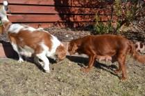 Oddball- Banksia Park Puppies - 6 of 33