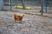 rosana-banksia-park-puppies-14-of-16