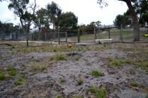 rosana-banksia-park-puppies-7-of-16
