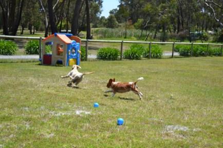 banksia-park-puppies-aino-2-of-23