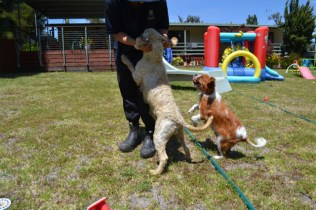 banksia-park-puppies-aino-8-of-23