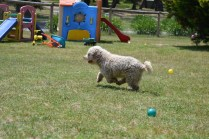 Banksia Park Puppies Fooseball - 23 of 28
