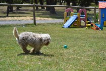 Banksia Park Puppies Fooseball - 26 of 28
