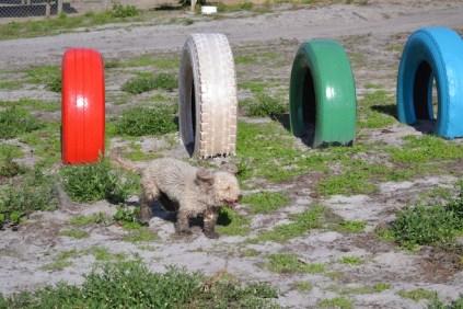 Banksia Park Puppies Fooseball - 4 of 17