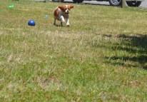 banksia-park-puppies-hera-6-of-16