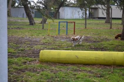 banksia-park-puppies-missy-13-of-40