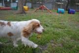 banksia-park-puppies-missy-21-of-40