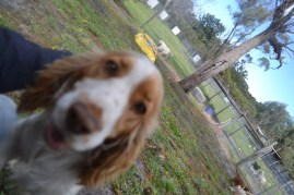 banksia-park-puppies-missy-37-of-40
