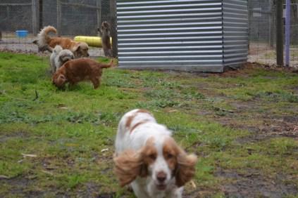 banksia-park-puppies-missy-38-of-40