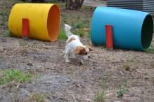 Banksia Park Puppies Muffy
