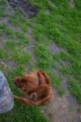 Banksia Park Puppies Sage - 14 of 14