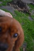 Banksia Park Puppies Sage - 6 of 14