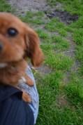 Banksia Park Puppies Sage - 7 of 14