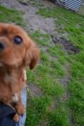 Banksia Park Puppies Sage - 8 of 14