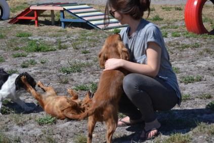 Banksia Park Puppies Willbee - 1 of 54 (17)