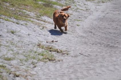 Banksia Park Puppies Willbee - 1 of 54 (39)
