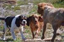 Banksia Park Puppies Willbee - 1 of 54 (44)