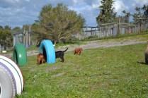 Banksia Park Puppies Willbee - 23 of 29