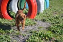 Banksia Park Puppies Willbee - 29 of 29