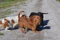 Banksia Park Puppies Willbee - 4 of 29