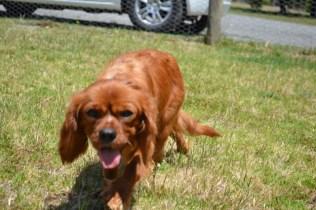 sage-banksia-park-puppies-11-of-13
