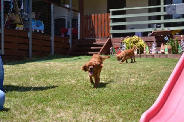 sage-banksia-park-puppies-13-of-13