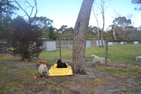 banksia-park-puppies-ariel-10-of-20