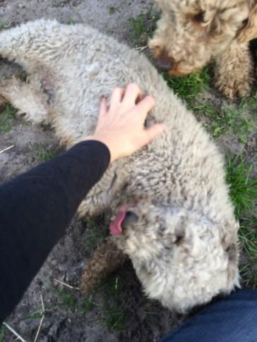 Banksia Park Puppies Kiki