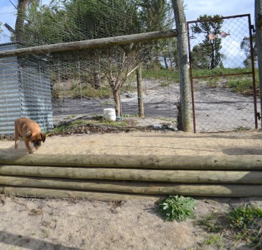 Banksia Park Puppies Minty