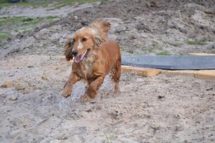 Banksia Park Puppies Sara - 12 of 39