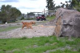 Banksia Park Puppies Sara - 7 of 39