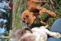 Banksia Park Puppies Huey