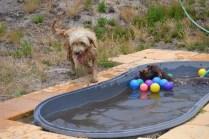 banksia-park-puppies-jacinta-wooster-ella-swoosh-37-of-51