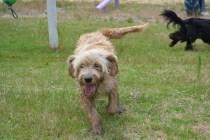 banksia-park-puppies-jacinta-wooster-ella-swoosh-45-of-51
