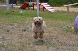 banksia-park-puppies-jacinta-wooster-ella-swoosh-6-of-51