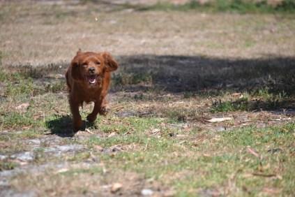 Banksia Park Puppies Muffin 2