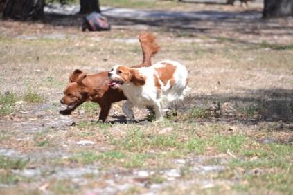 Banksia Park Puppies Muffin Ravi - 26 of 28