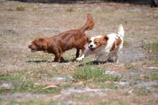 Banksia Park Puppies Muffin Ravi - 27 of 28