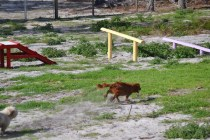 Banksia Park Puppies Poko - 7 of 19